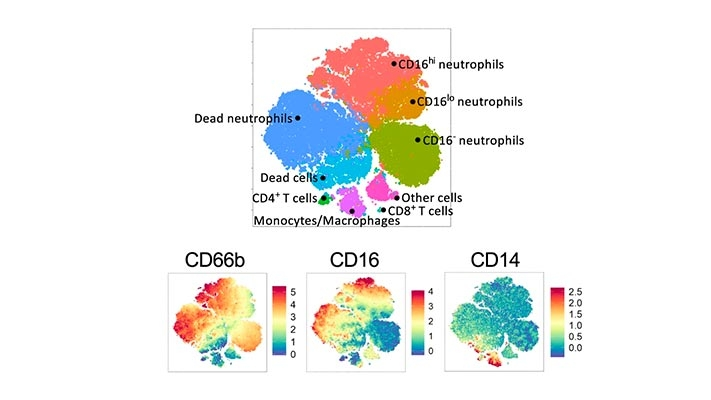 Influence of wind and relative humidity on the social distancing effectiveness to prevent COVID-19 airborne transmission: A numerical study